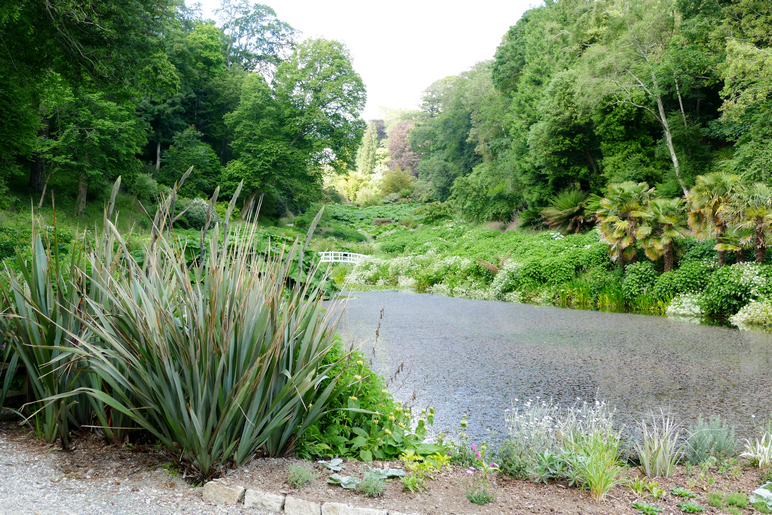 Mallard Pond ath the bottom of Trebah Gardens